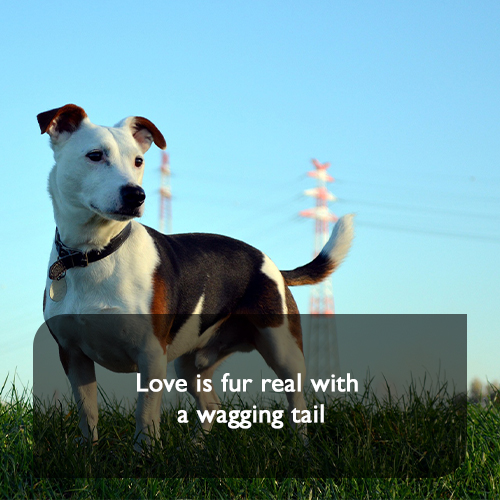 9. Love is fur real with a wagging tail